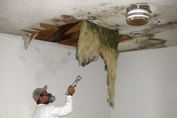 Employee inspecting for mold in ceiling.