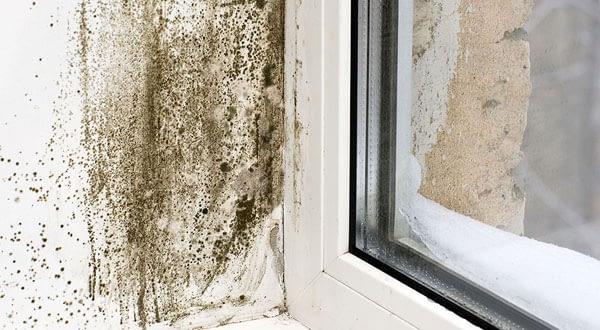 Mold Removal Brampton