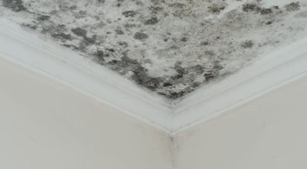 Mold Removal and Remediation in Oakville